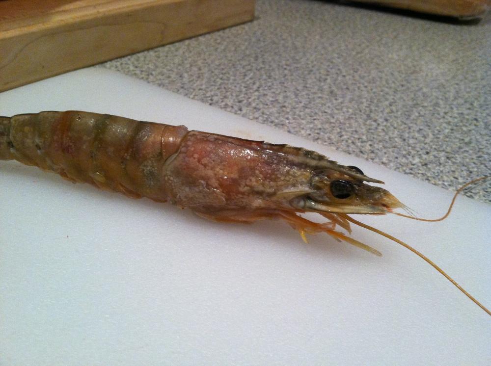 shrimp skillet 013